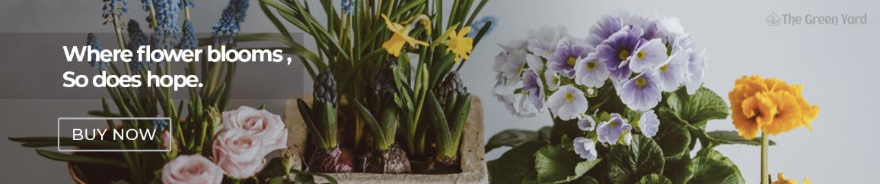 Best Plant Nursery Online Garden Store Plants Home Delivery